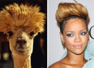 celebrity look alikes animals