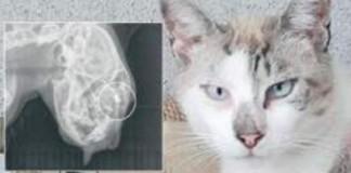 Sparano al gatto